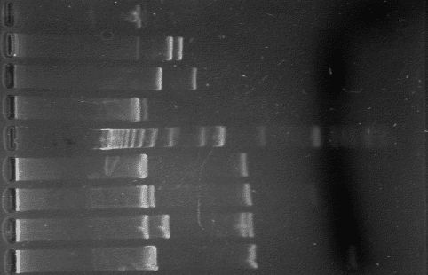 taking a look at agarose My advice is to take a closer look at how you are pouring your agarose to make sure you have a nice contact surface and try to test if your agarose can support your cells based on the composition of your agarose solution i do not see why not, but then again there are very few things you can really change in this assay.